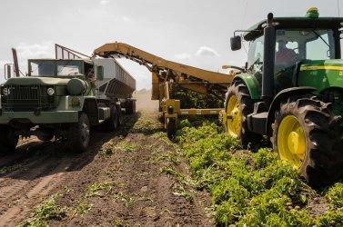 Dotace: Zpracování a uvádění na trh zemědělských produktů